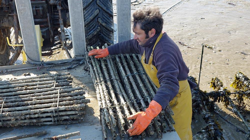 Raymond Kadem charge les paquets de 20 tubes collecteurs