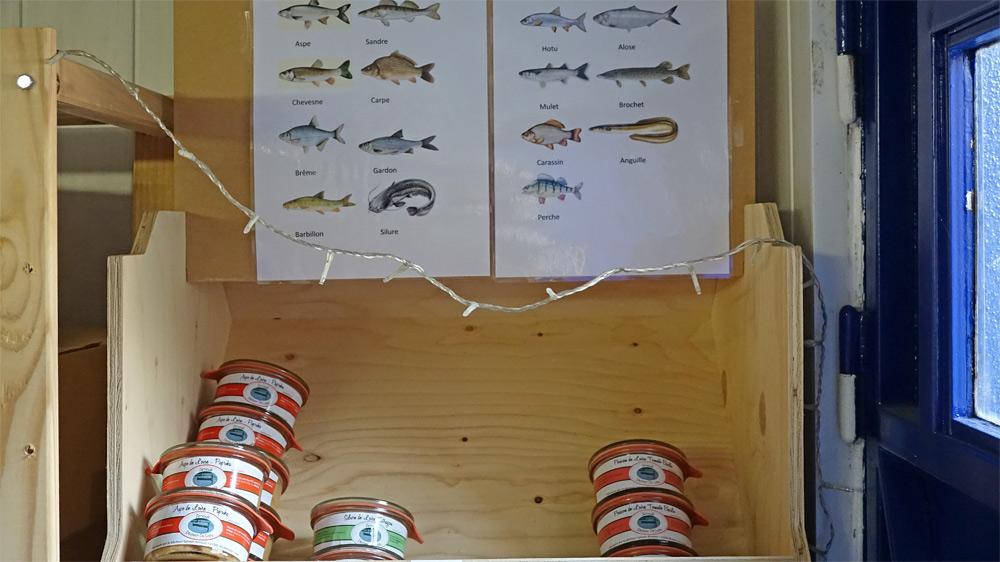 Les différents poissons de Loire