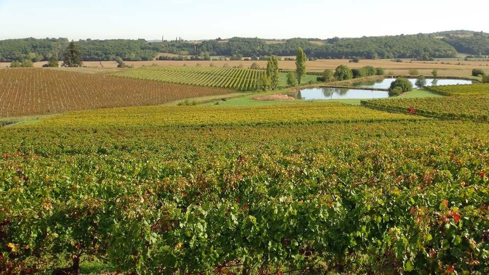 Le vignoble du Domaine Laffitte-Teston