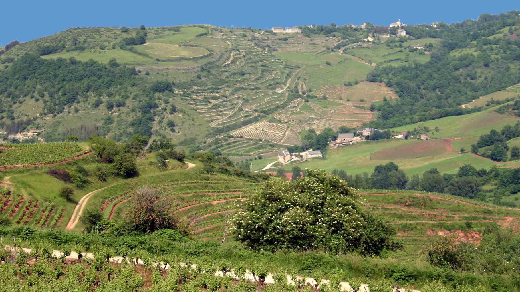 Le vignoble de Marcillac