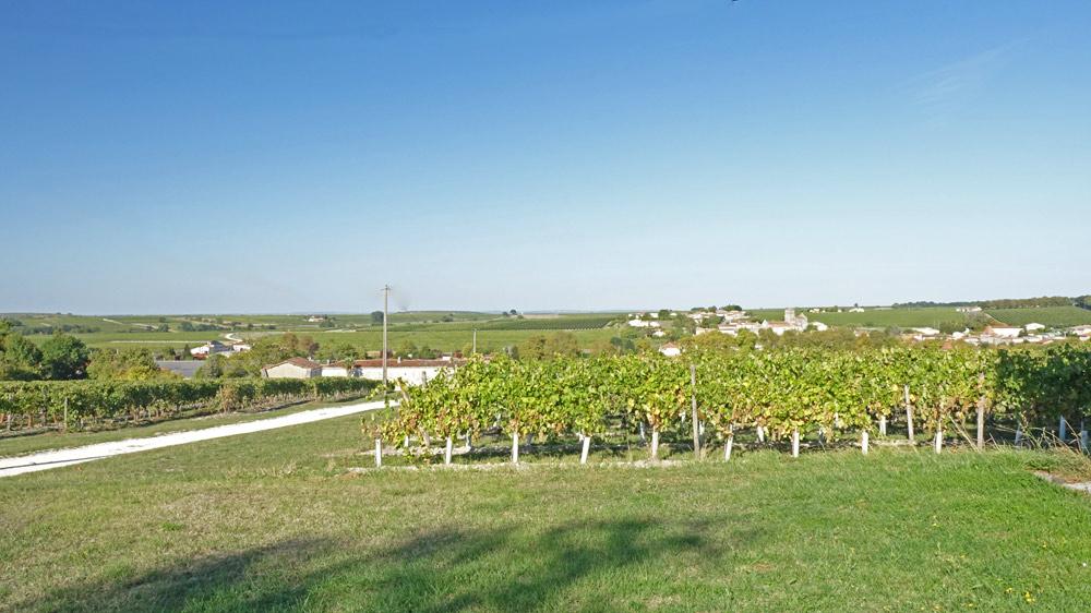 Le vignoble de La Pouyade