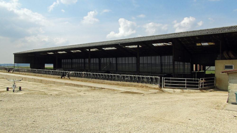 """Bâtiment pour les """"Prim'Holstein"""