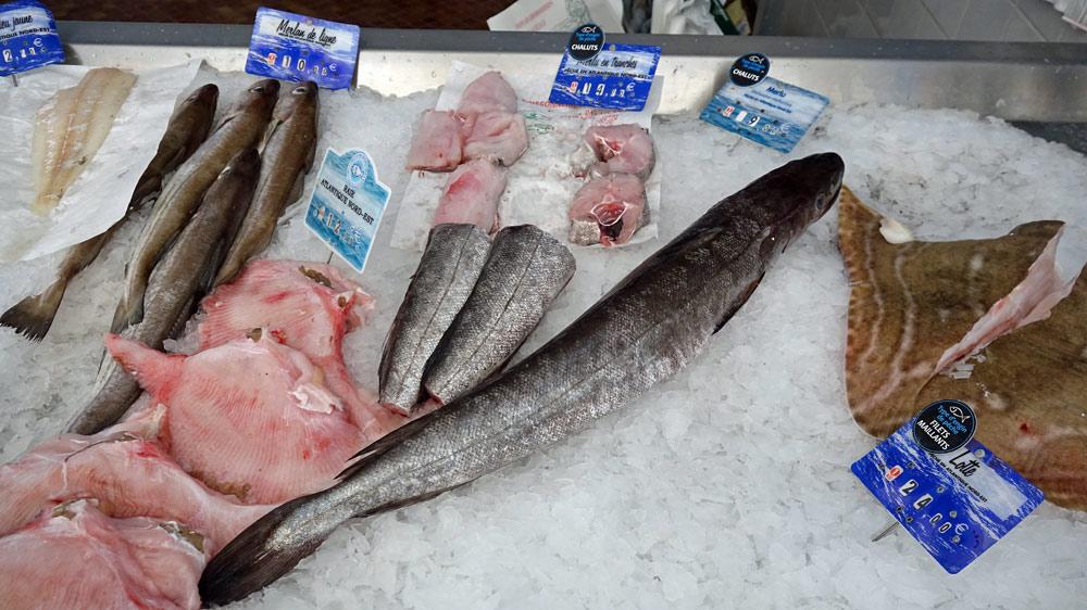 Quelques poissons en vente