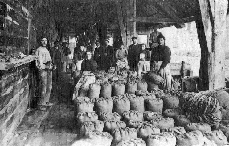 Le pesage des sacs (Crédit photo : www.sel-salies-de-bearn.com)