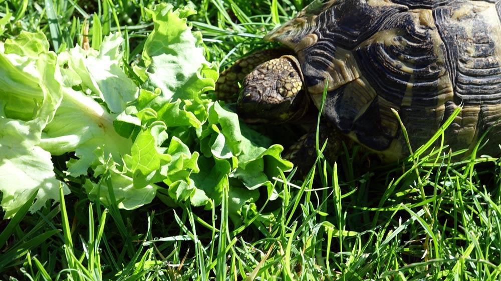 Un occupant du jardin, bien nourri !