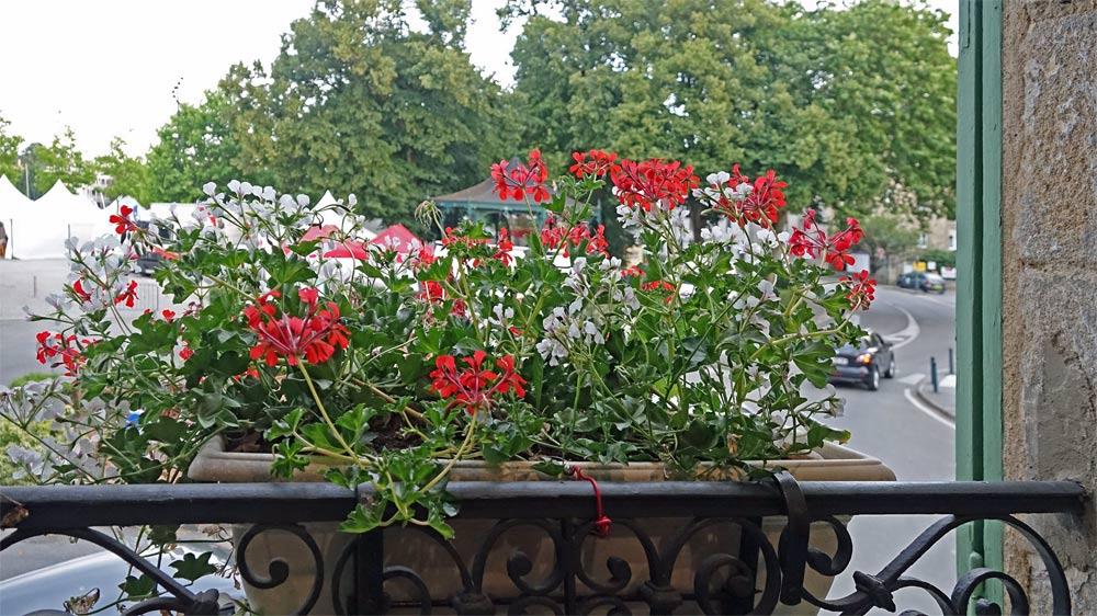 Derrière cette jardinière fleurie, une vue sur le port de Vannes