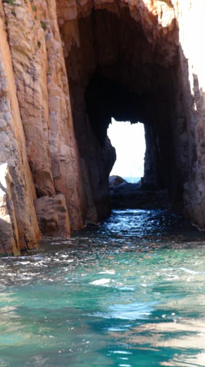 Dans une infractuosité rocheuse, la Sardaigne ...