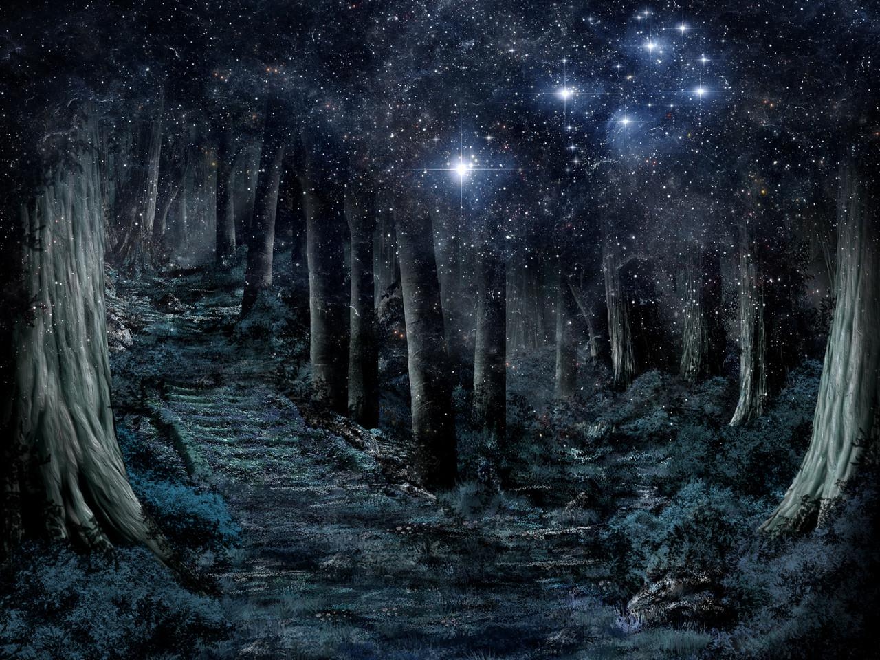 Herbstwald - Nacht mit Plejaden und Venus