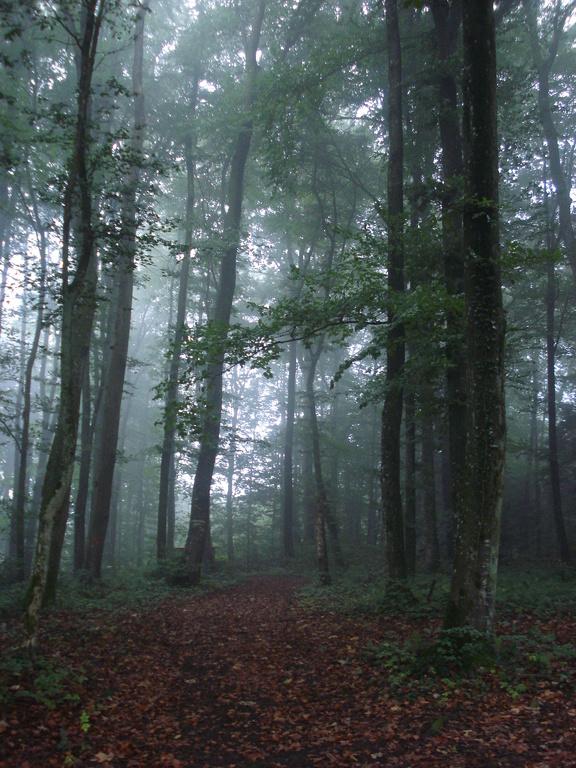 Waldweit Schönheit