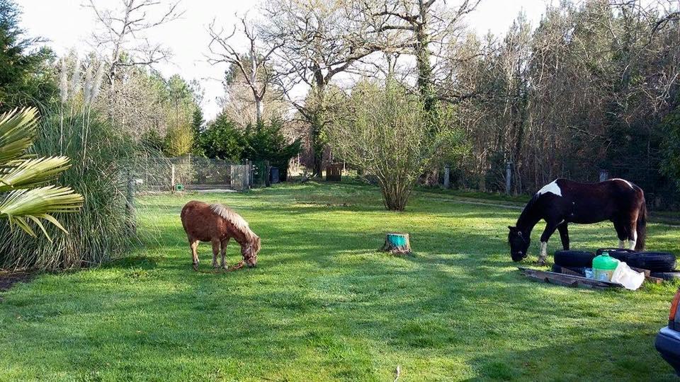 Emir chez ses nouveaux adoptants