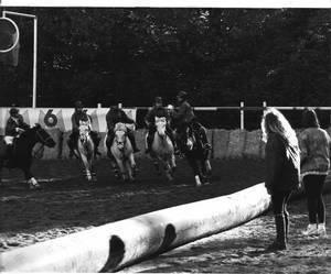 Calypso, lors d'une compétition de horse ball (tout à droite)