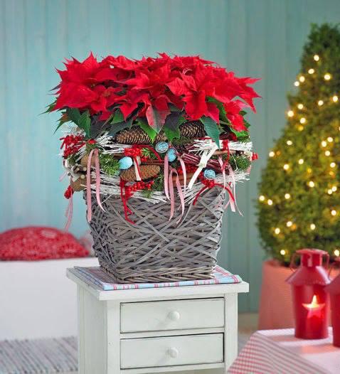 Centrotavola Stella Di Natale.Composizioni Per Natale Signorelli Flowers Coffee