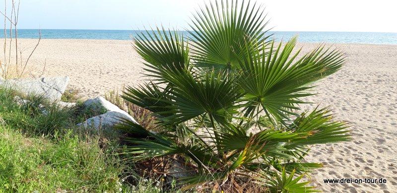 gepflegte Palmen am Strand