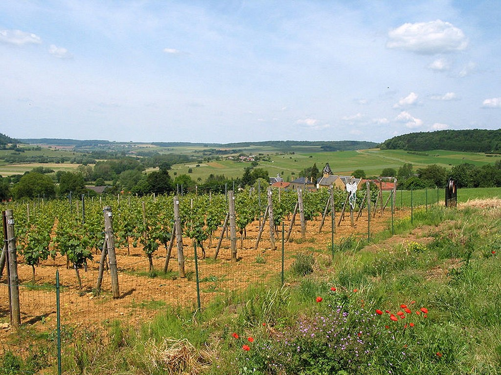 Torgny -  Le vignoble