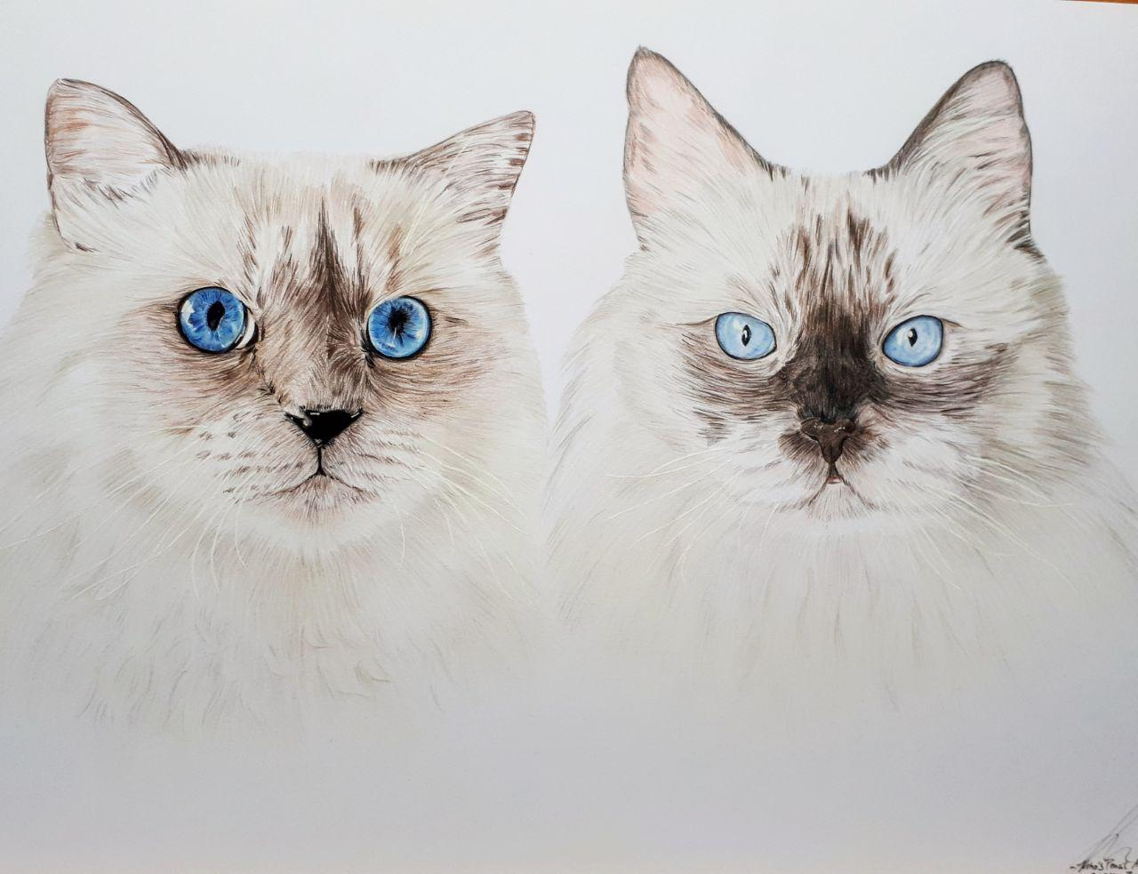 Summer (L) und Finch (R) - A3 Doppelportrait- Dezember 2018