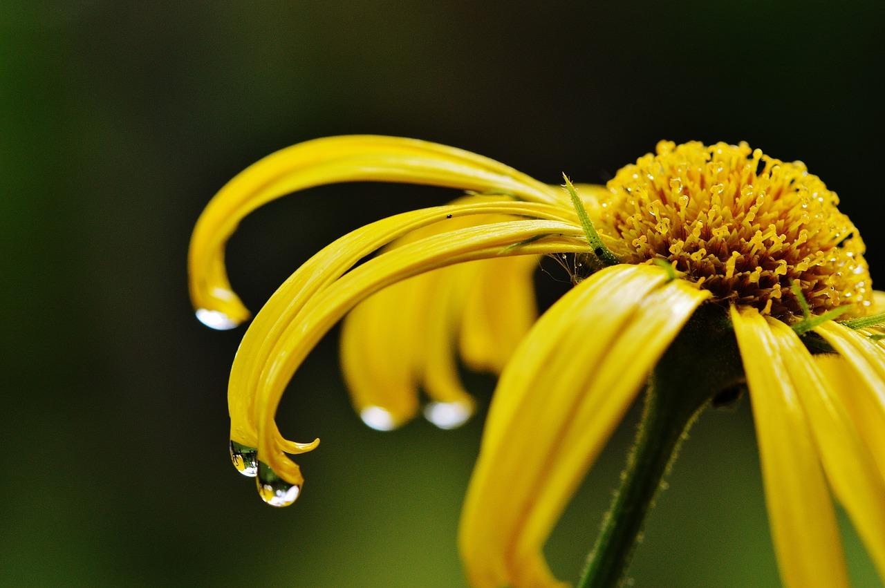 Unser Homöopathie-Blog: Alles rund um die Klassische Homöopathie