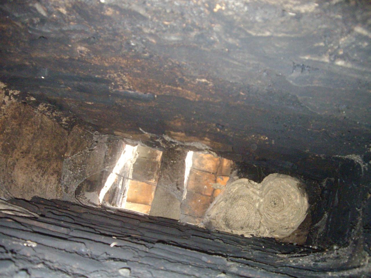 Nid de Guêpes dans conduit de cheminée