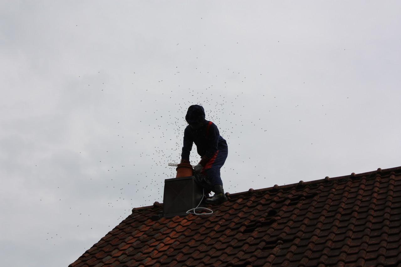 Essaim d'abeilles dans conduit de cheminée