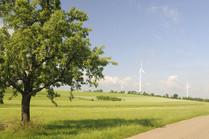 Feld mit Baum und Windrädern