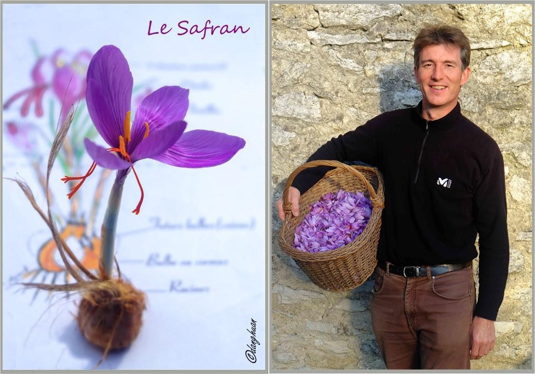 Hervé Viron - Safrannier dans le Gâtinais