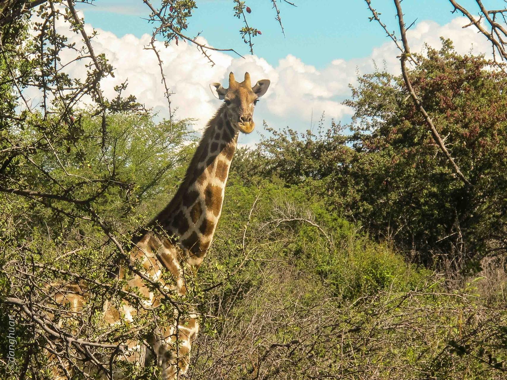parc national d'Estosha - Namibie