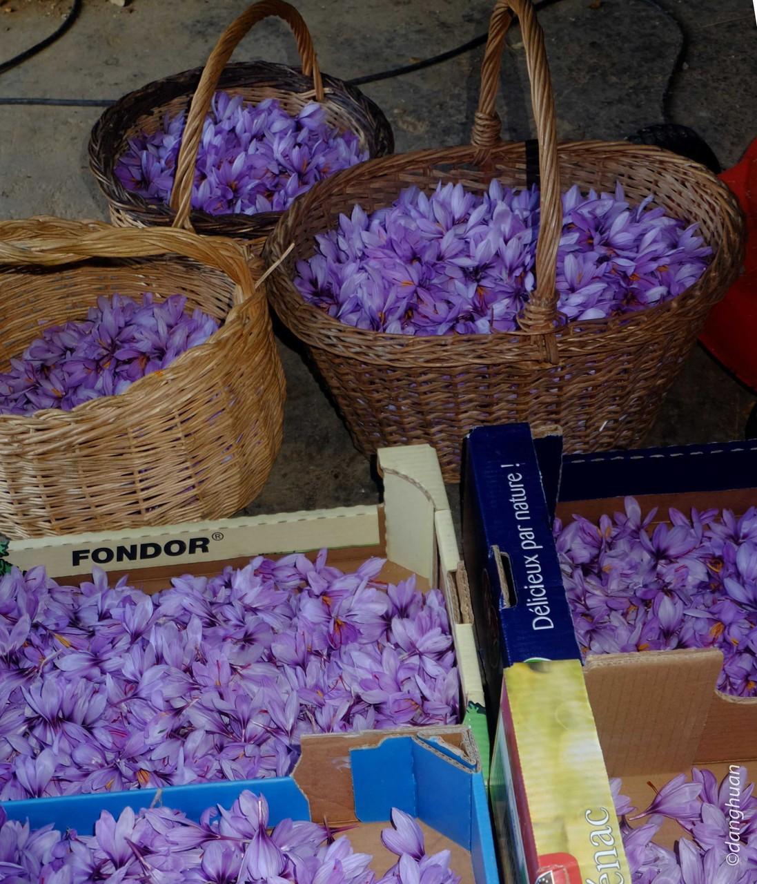 Mille fleurs sont cueillies en 1 H et émondées en 2 H