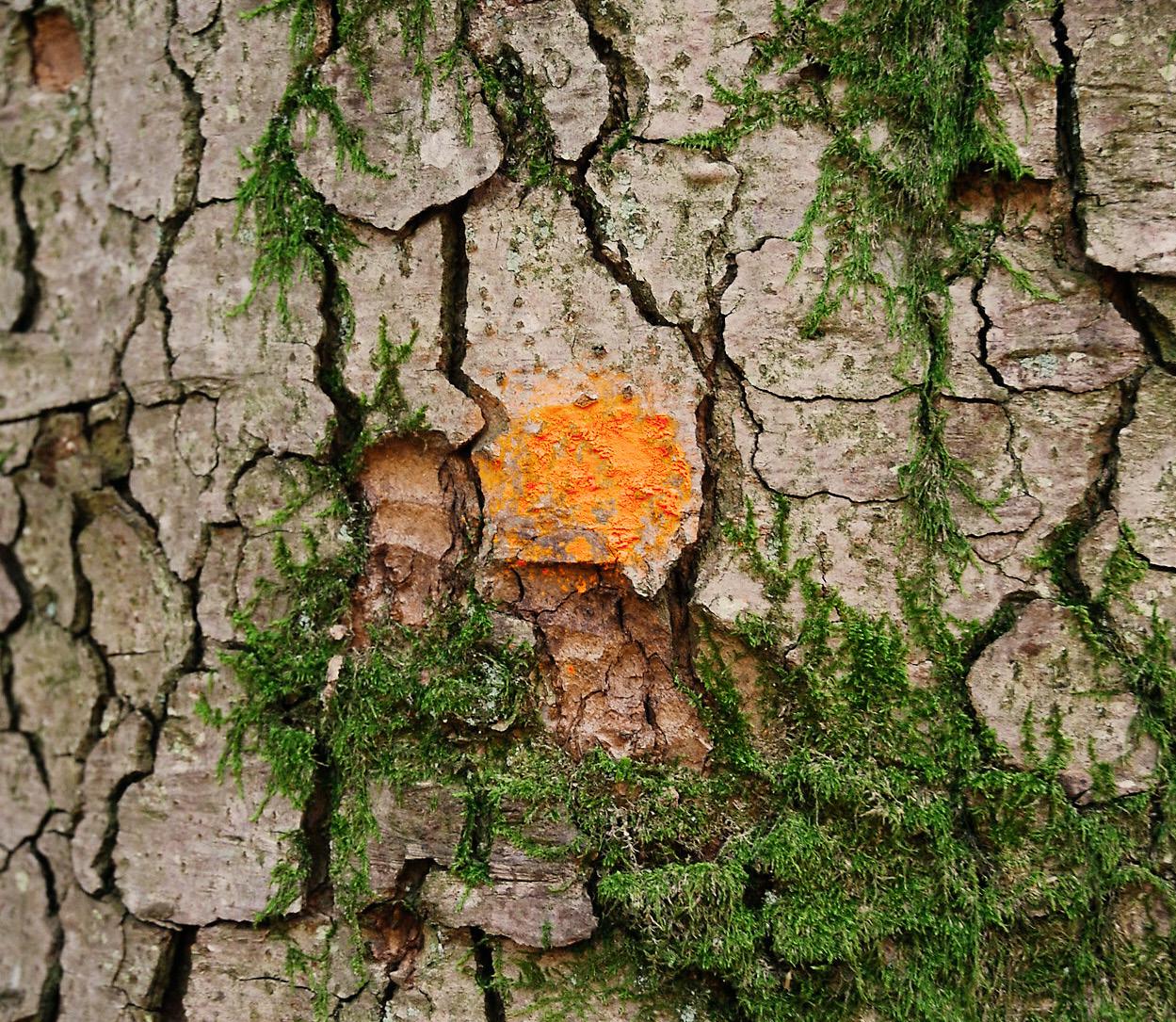 Waldwirtschaft hat Potenzial