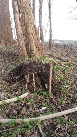 Umgestürzte Bäume am Rodedamm