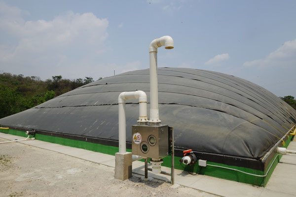 Covered lagoon digester for pig manure