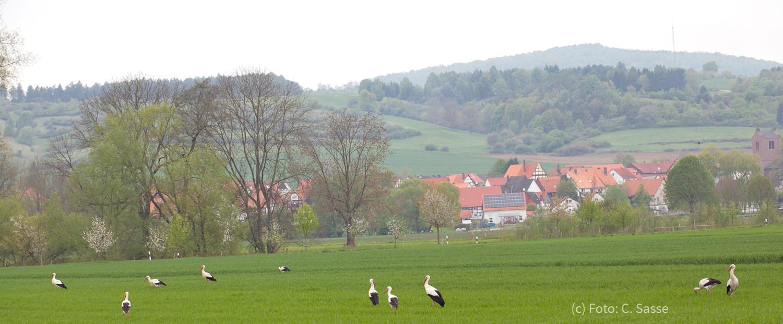 22. April 2014 - 10 Störche in Sielen / Breite Wiese