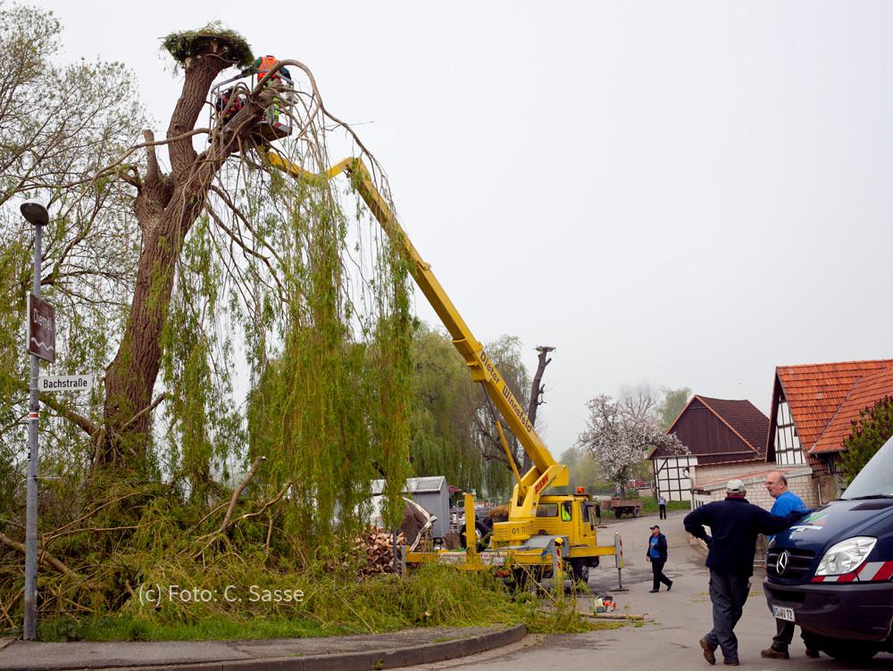 23. April 2014 - Horst 2 auf Weide wird angebracht