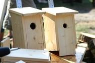 Nisthilfen geben Vögeln ein Zuhause