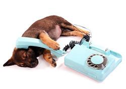 お電話からのお申し込み