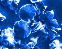 Krystalky původně vyloučeného uhličitanu vápenatého (kalcit)