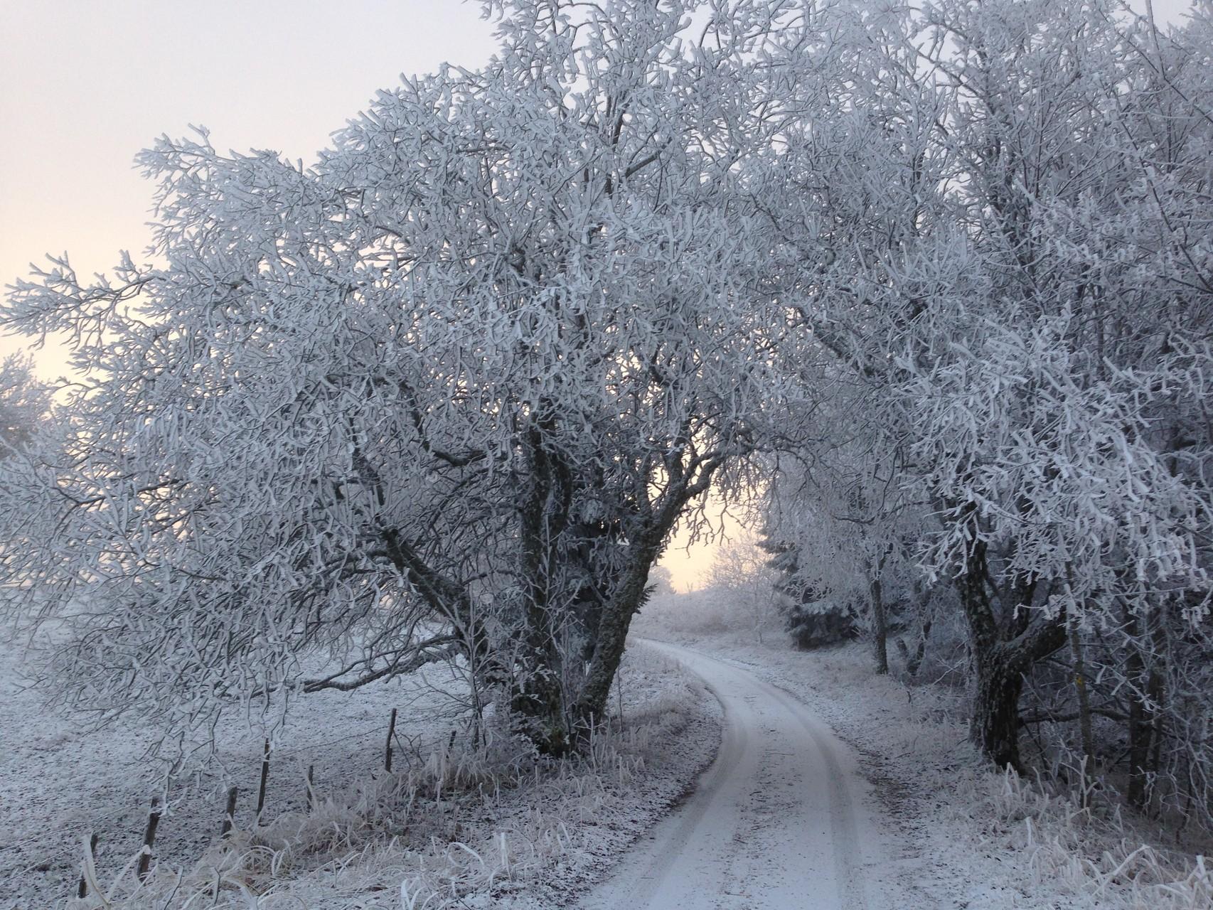 Le croquant de l'hiver
