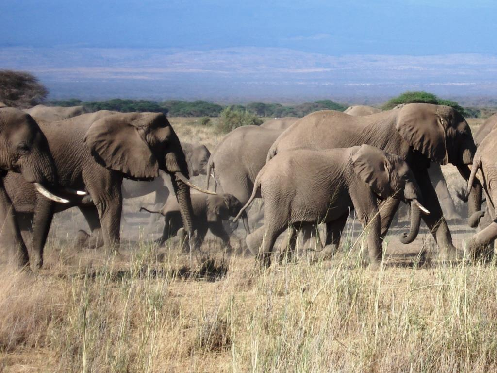 Spektakuläre Tiervielfalt in den Nationalparks von Kenia mit riesigen Tierherden