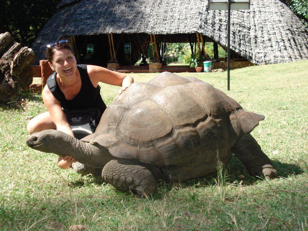 Hundertjährige Schildkröten zum Anfassen gibt es in einigen Hotels und im Haller-Park