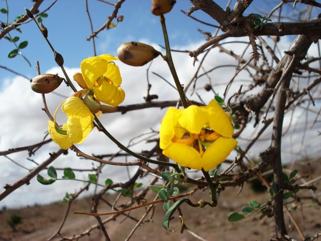 Auch in der scheinbar trockenen Savanne blühen Blumen