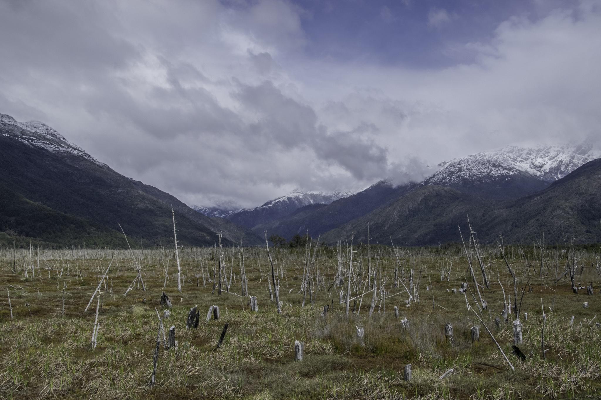 Baumfriedhof - ein trauriger Anblick (vor Jahrzehnten gewollt abgefackelt)