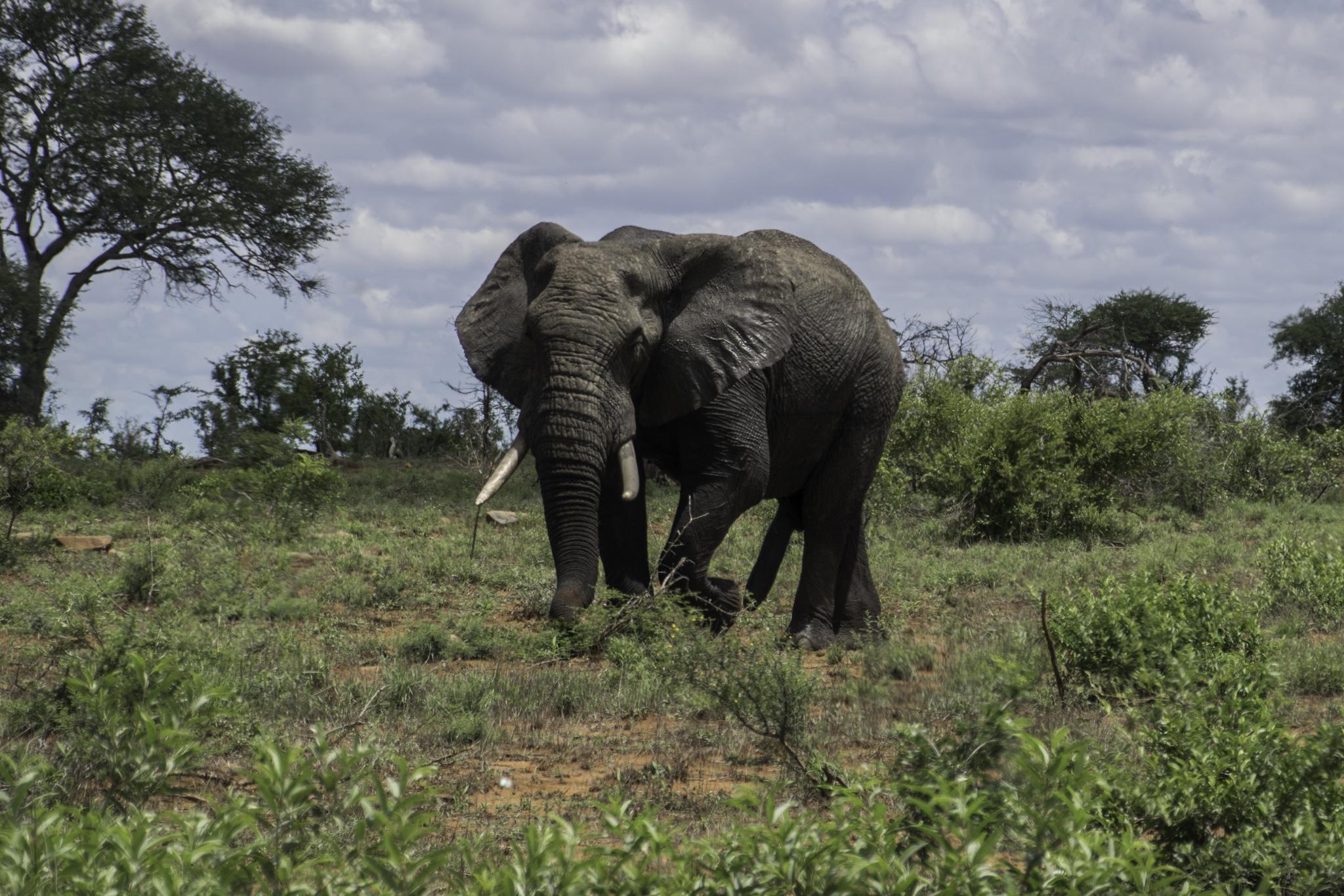 Unser erster Elefant! - Big Five Nr. 4