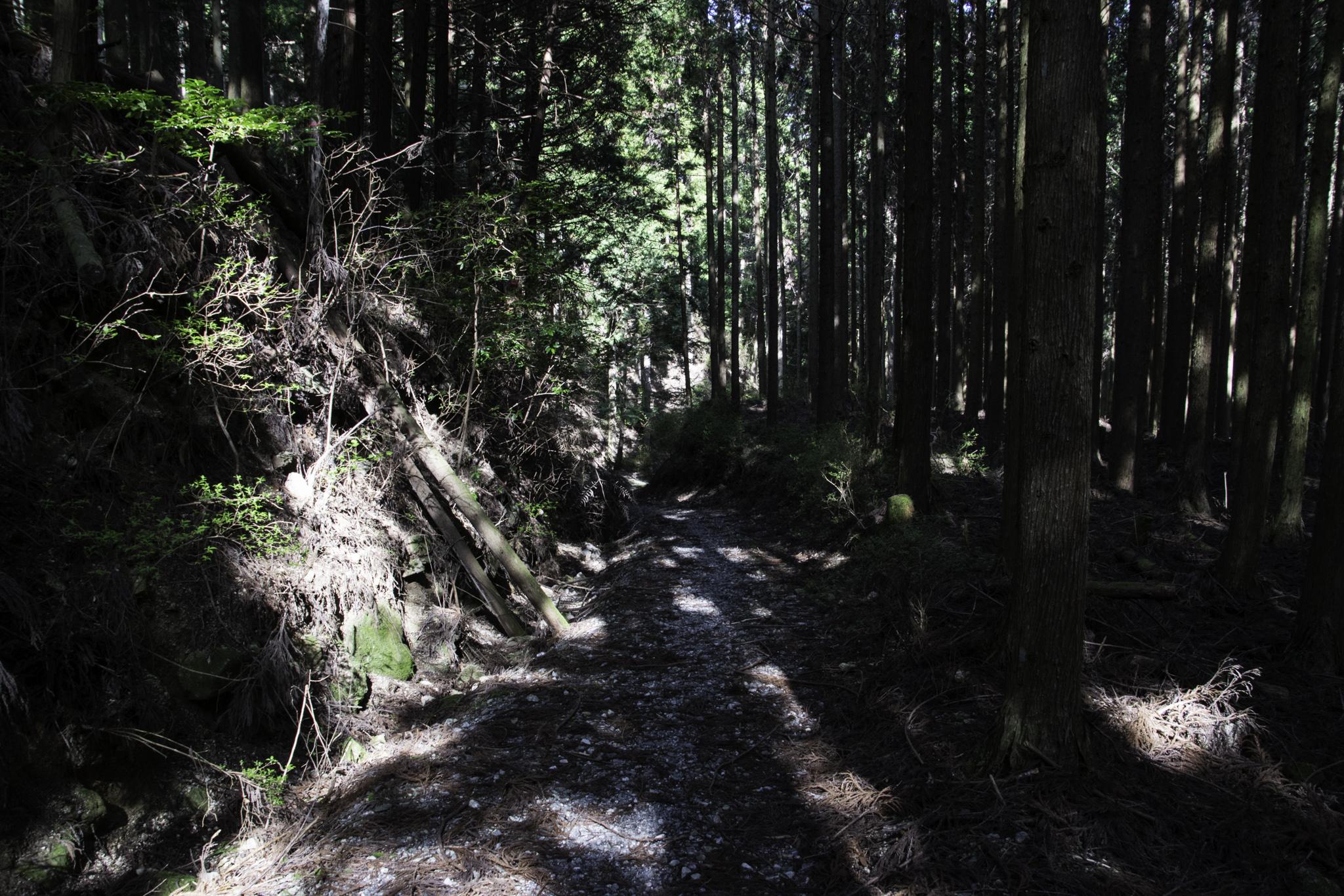 Fahrt auf Naturstrasse in den Bergen