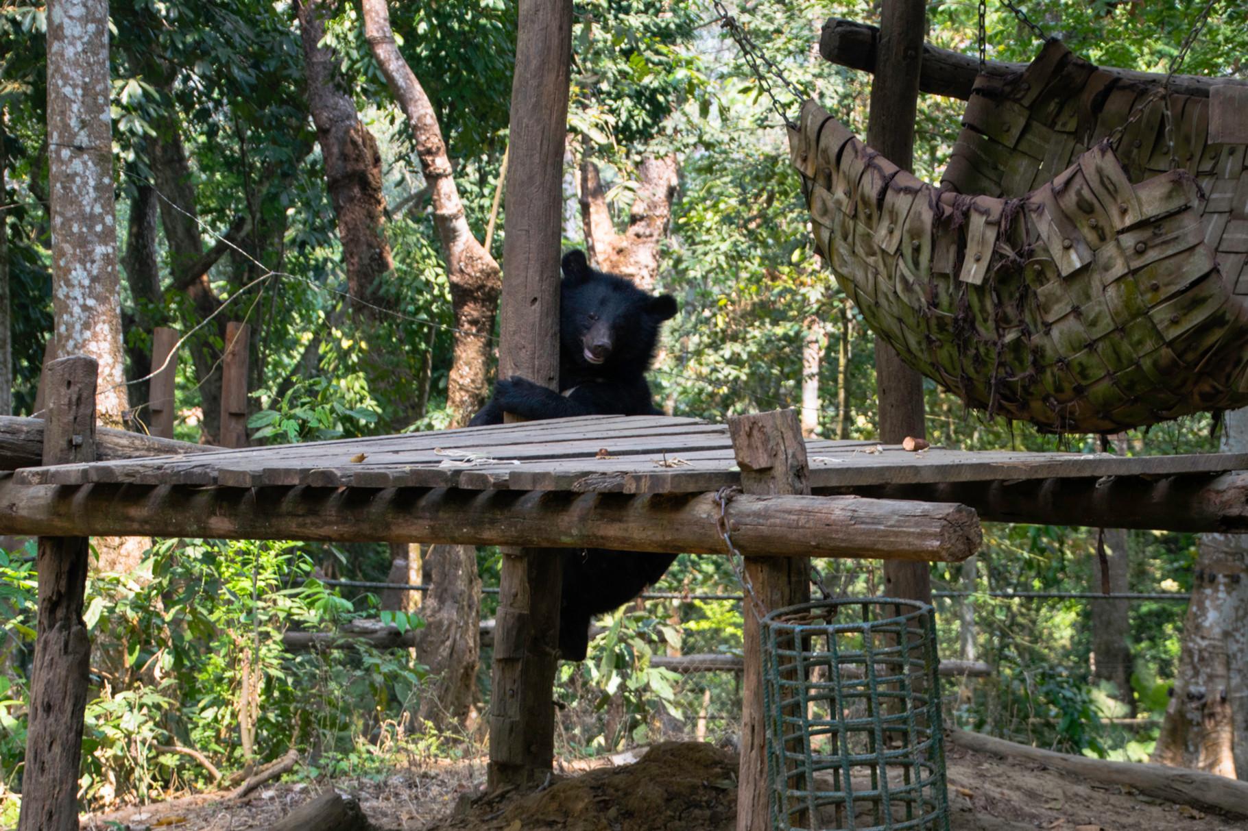 Bären-Pflegestation nahe Luang Prabang