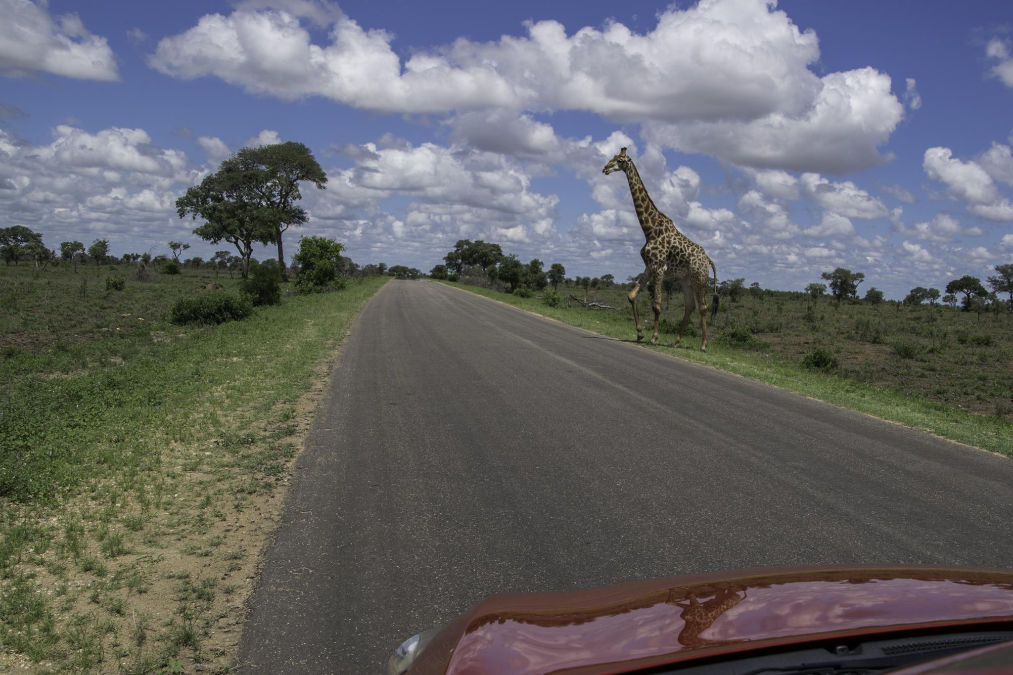 Im Krüger-Nationalpark waren wir mit einem Mietauto unterwegs