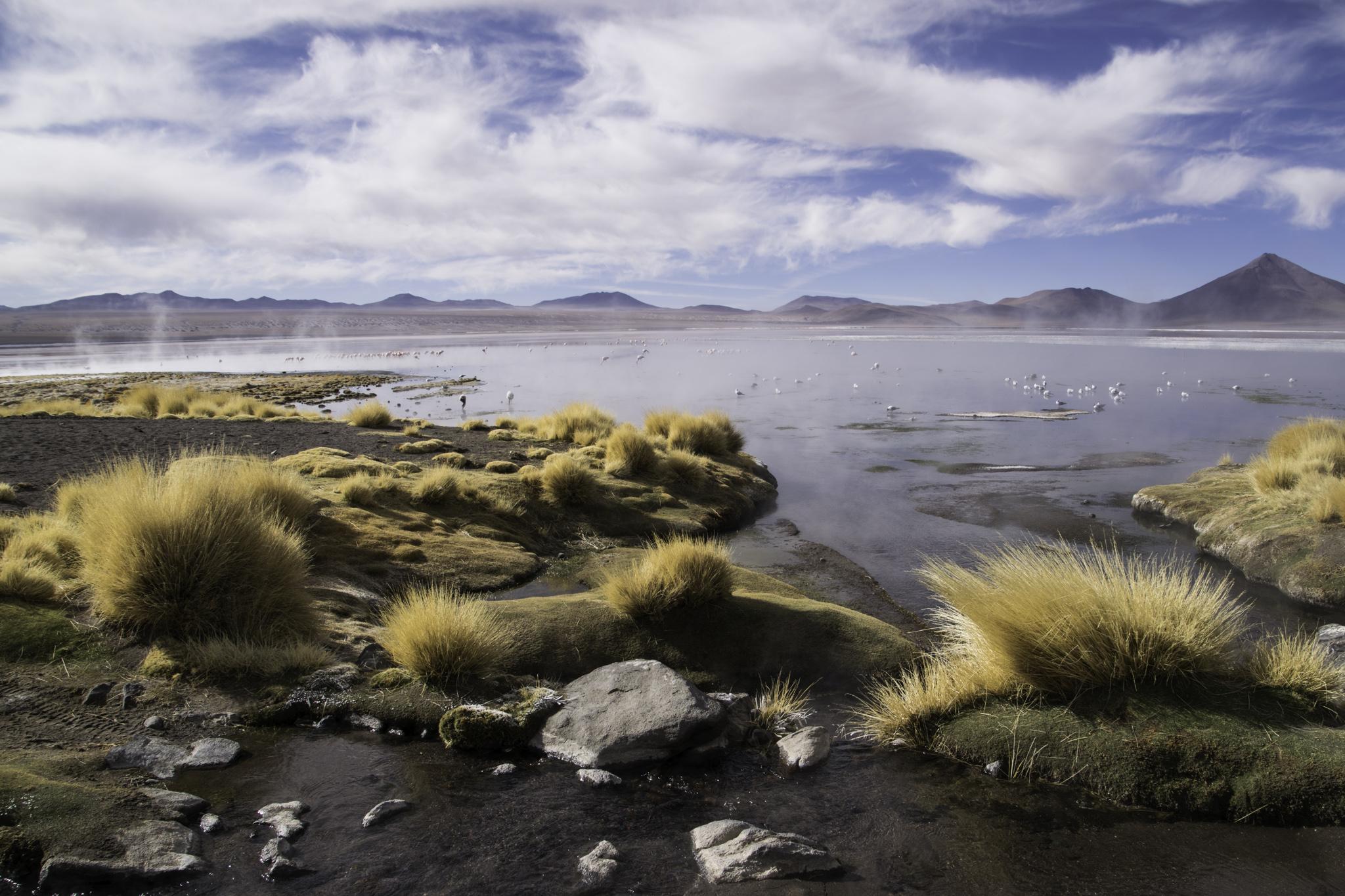 Laguna Colorada am frühen Morgen