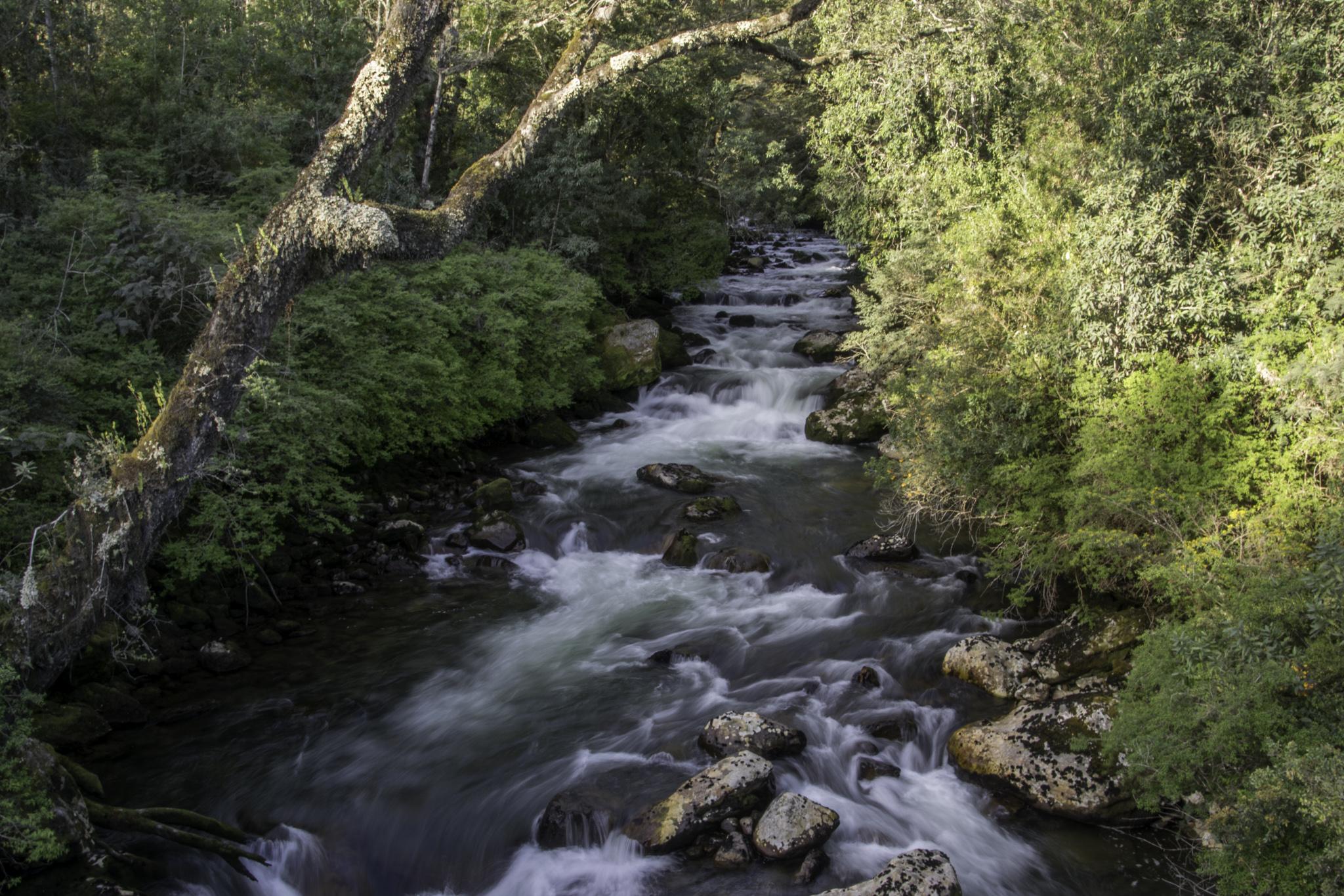 Wassersorgen hatten wir keine, solche Bäche und Flüsse passierten wir laufend