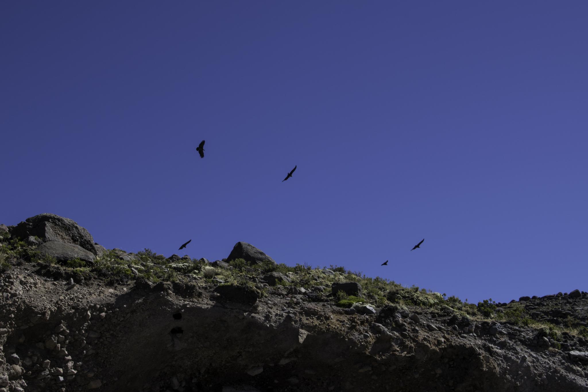 Die Kondore kreisten bereits über uns... ;-)
