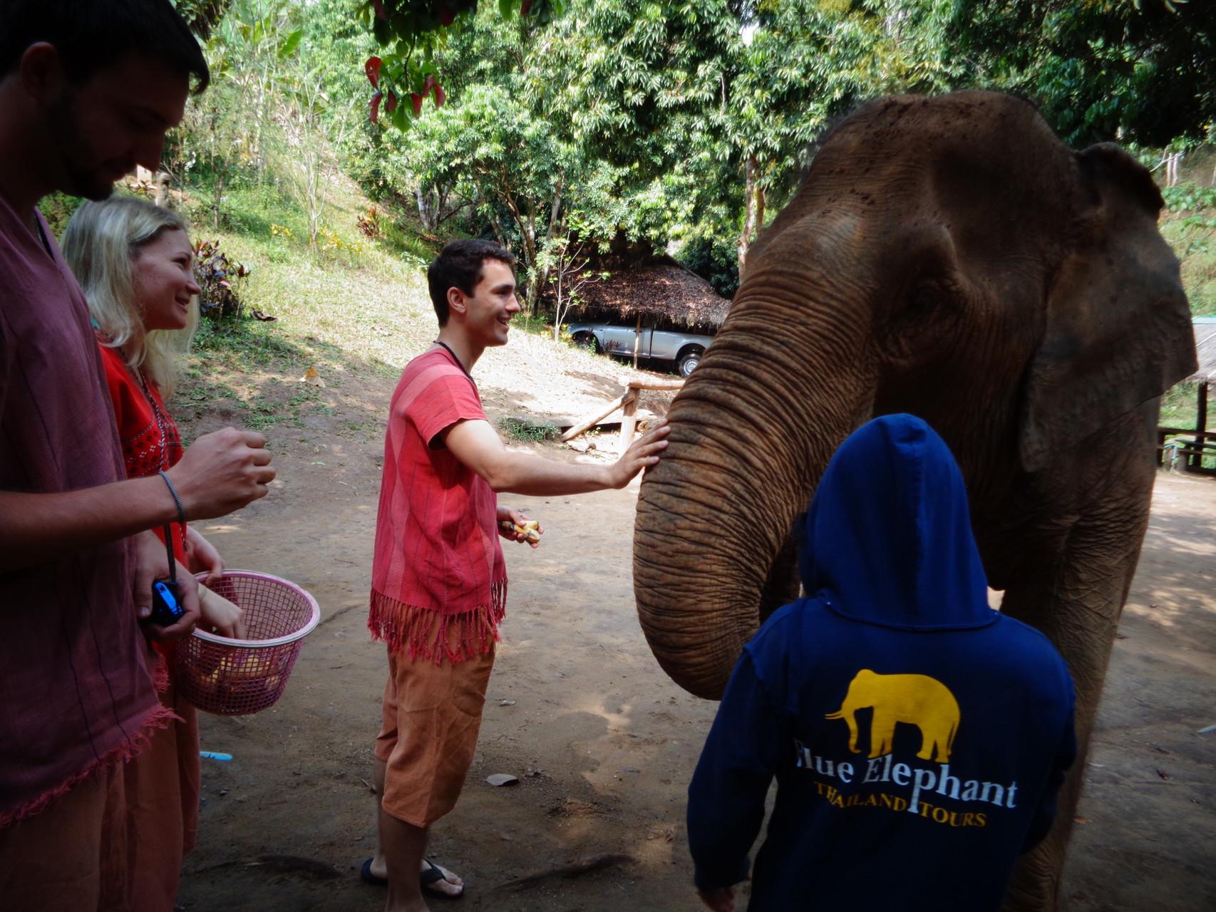 Erster Kontakt mit einem Elefanten