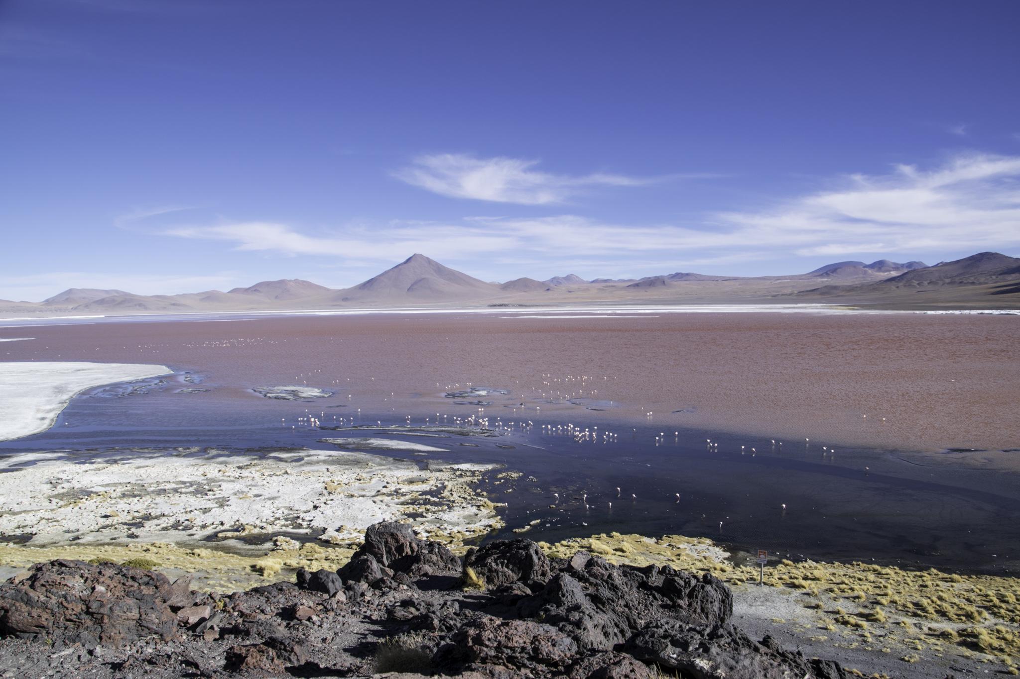 Laguna Colorada; die Mineralien verfärben auch die Seen