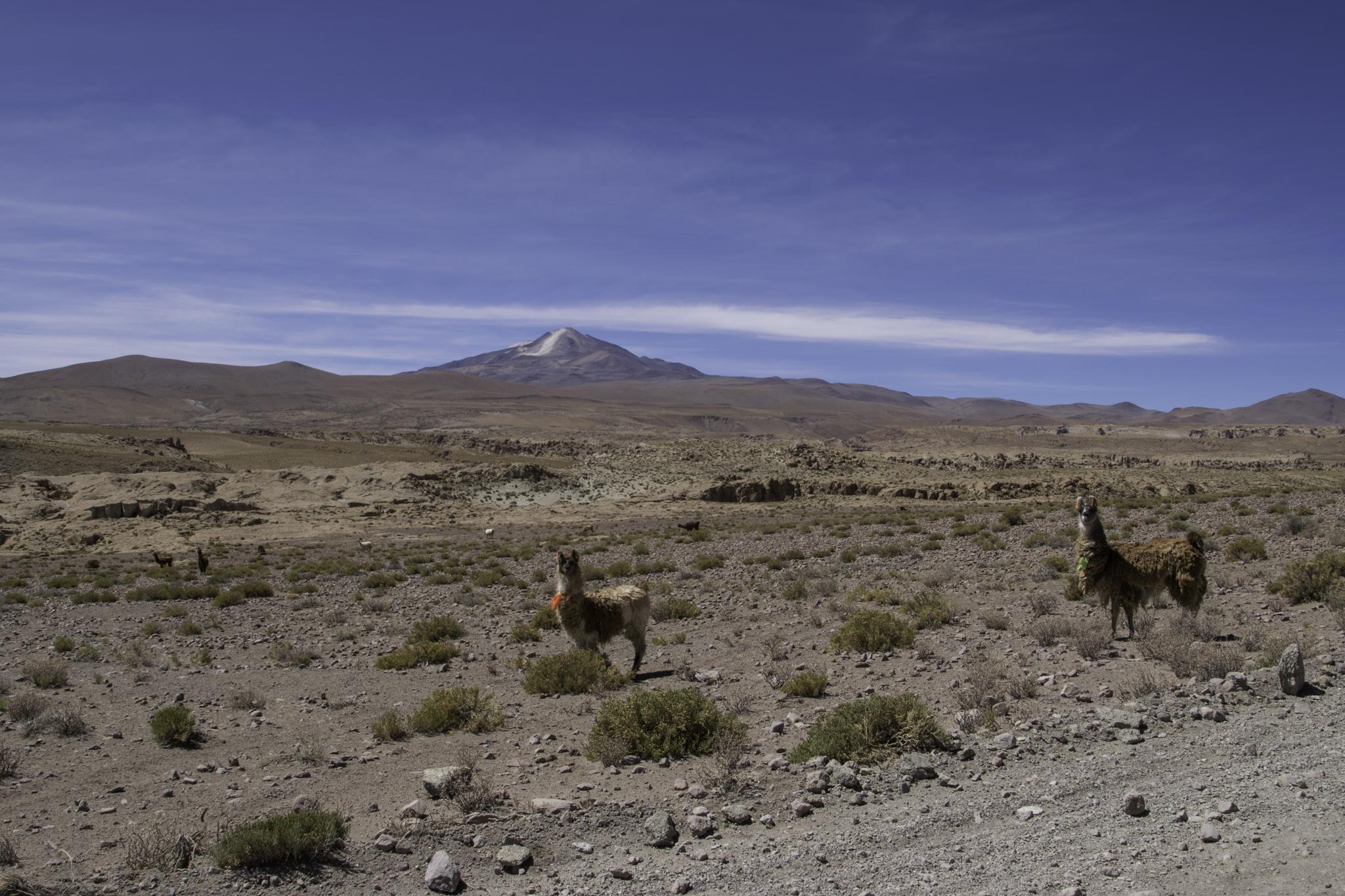 Nochmals ein letzter Blick zum Uturuncu bei der Weiterfahrt