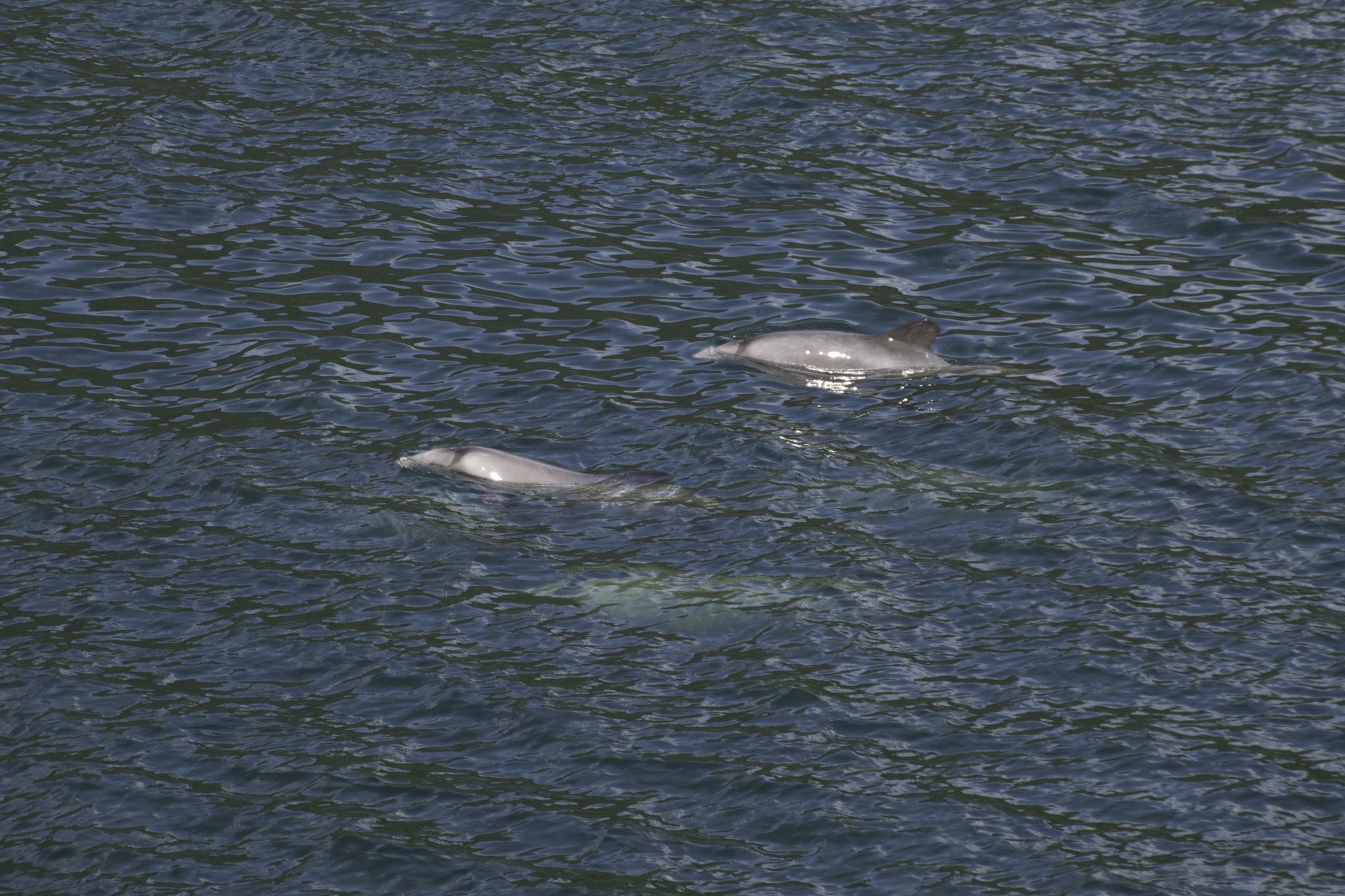Schon nach dem Frühstück und nochmals beim Znüni konnten wir Delfine beobachten